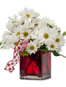 Bouquet of White Malaysian Mums in Vase